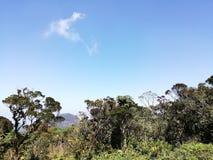 Aard bosbomen en hemel stock afbeelding
