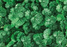 Aard de achtergrondvlakte legt van groene bladeren met uitstekende filter stock afbeeldingen