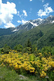 Aard in de bergen Royalty-vrije Stock Foto's