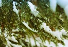 Aard in de bosboom Stock Foto