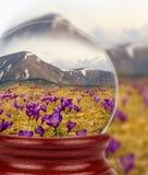 Aard in de glasbal Krokus op achtergrond van bergen Stock Afbeeldingen