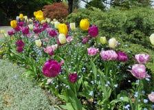 Aard in de Stad: Zoete kleurrijke bloembedden in bloei, Vancouver, Mei 2018 stock afbeeldingen