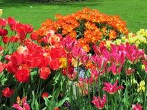 Aard in de Stad: Zoete kleurrijke bloembedden in bloei, Vancouver, Mei 2018 Royalty-vrije Stock Foto