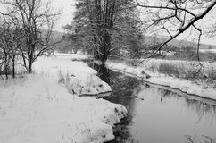 Aard in de winter Stock Fotografie