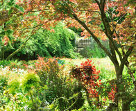 Aard eigen tuin Royalty-vrije Stock Afbeelding