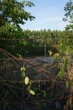 Aard en bos episch Thailand Stock Fotografie