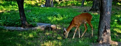 Aard en deers Royalty-vrije Stock Afbeeldingen