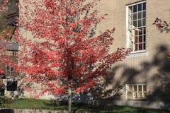 Aard en stad De rode herfst Royalty-vrije Stock Afbeelding