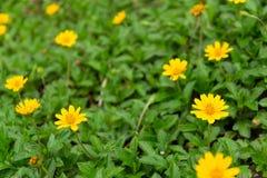 Aard gele bloemen stock foto's