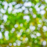 aard groene bokeh Stock Fotografie