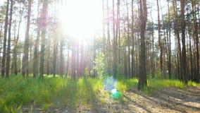 Aard groene boszonsondergang stock videobeelden