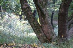 aard groene houten achtergronden Royalty-vrije Stock Afbeeldingen