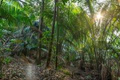 Aard Groot Forest Trees Stock Afbeelding