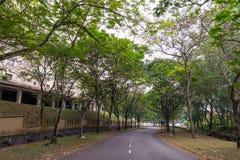 Aard Groot Forest Trees Royalty-vrije Stock Fotografie
