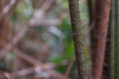 Aard Groot Forest Trees Royalty-vrije Stock Afbeeldingen