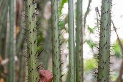 Aard Groot Forest Trees Stock Afbeeldingen