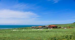 Aard, het overzees, landschap stock foto's