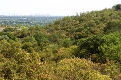 Aard, heuvels, vegetatie, stad Royalty-vrije Stock Foto's