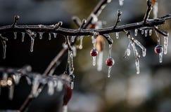 Aard in ijs na een onweer wordt ingepakt dat Royalty-vrije Stock Foto's