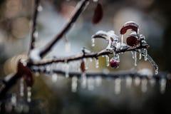 Aard in ijs na een onweer wordt ingepakt dat Stock Foto