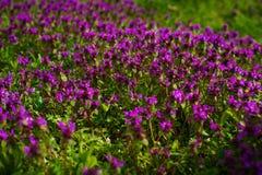 Aard Kleurrijke Natuurlijke Vage Achtergrond Bokeh, de Wilde Bloemen van Boke met de Achtergrond van Absract van Zonlichtkleuren Stock Fotografie