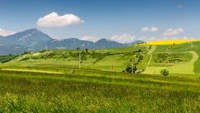Aard in Liptov-gebied, Slowakije in de zomer van 2015 Stock Fotografie