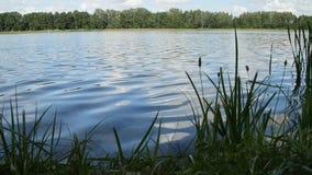 Aard met een kalme oppervlakte van duidelijk meerwater en groene installaties stock video