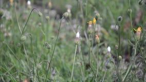 Aard met wilde bloemen en installaties stock footage