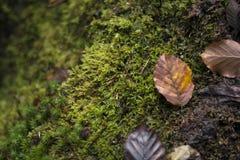 Aard minimale achtergrond met de herfst bruine bladeren en groene nat Stock Fotografie