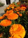 Aard Mooie bloemen Stock Afbeelding