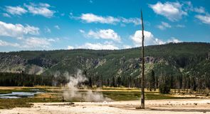Aard MORT, Dode boom in Yellowstone stock foto's
