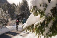 Aard in nadruk Tatransky narodny park Tatry Vysoke slowakije royalty-vrije stock afbeeldingen