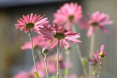 Aard op een zonnige dag Installaties, bloemen en Zonnige atmosfeer stock fotografie