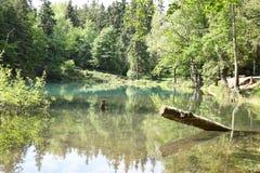Aard in Polen, Groen Meer Stock Foto's