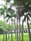 Aard in Thailand Royalty-vrije Stock Foto's