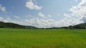 Aard timelapse Mooi de zomerlandschap timelapse Bos, groen gebied, blauwe hemel met wolken en weg timelapse stock footage