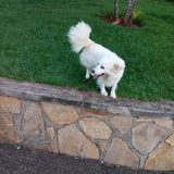 Aard uit hond en groen gras wordt samengesteld dat royalty-vrije stock afbeeldingen