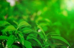 Aard van bladeren voor behang of achtergrond royalty-vrije stock afbeelding