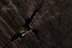 Aard van boom Stock Foto's