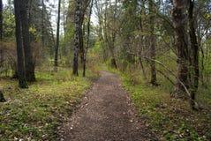 Aard van Dendropark, Lori Province, Armenië royalty-vrije stock foto's