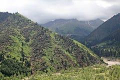 Aard van groene bomen en onderstellen, dichtbij Medeo in Alma Ata, Kazachstan, Azië Stock Fotografie