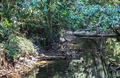 Aard van het Nationale Park van Gunung Mulu van Sarawak, Maleisië royalty-vrije stock afbeelding