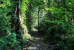 Aard van het Nationale Park van Gunung Mulu van Sarawak, Maleisië stock fotografie