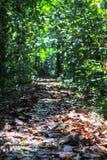 Aard van het Nationale Park van Gunung Mulu van Sarawak, Maleisië royalty-vrije stock foto