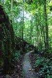 Aard van het Nationale Park van Gunung Mulu van Sarawak, Maleisië royalty-vrije stock fotografie