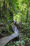 Aard van het Nationale Park van Gunung Mulu van Sarawak, Maleisië royalty-vrije stock afbeeldingen