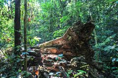 Aard van het Nationale Park van Gunung Mulu van Sarawak, Maleisië stock afbeeldingen