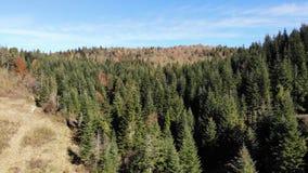 Aard van Karpatische bergen in de herfst, bergen en naaldbossen, vallei met sparren, satellietbeeld met voorwaartse vlucht stock videobeelden