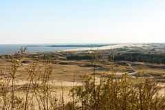 Aard van Letland Het duin met gras op de kust van de Golf van Riga wordt behandeld dat royalty-vrije stock foto