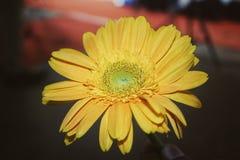 Aard van zonbloem stock afbeeldingen